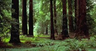 Forêt chêne 3.jpg