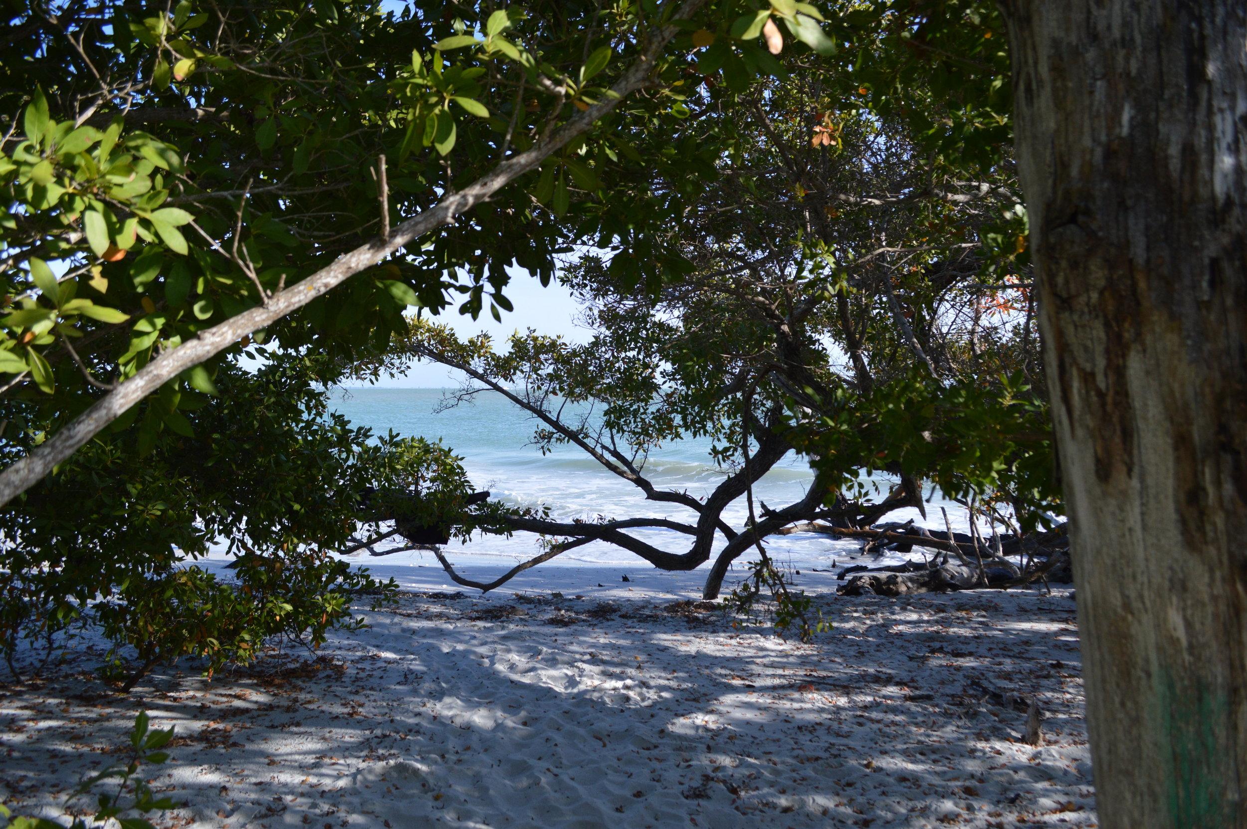 Enjoy a picnic under the mangrove canopy