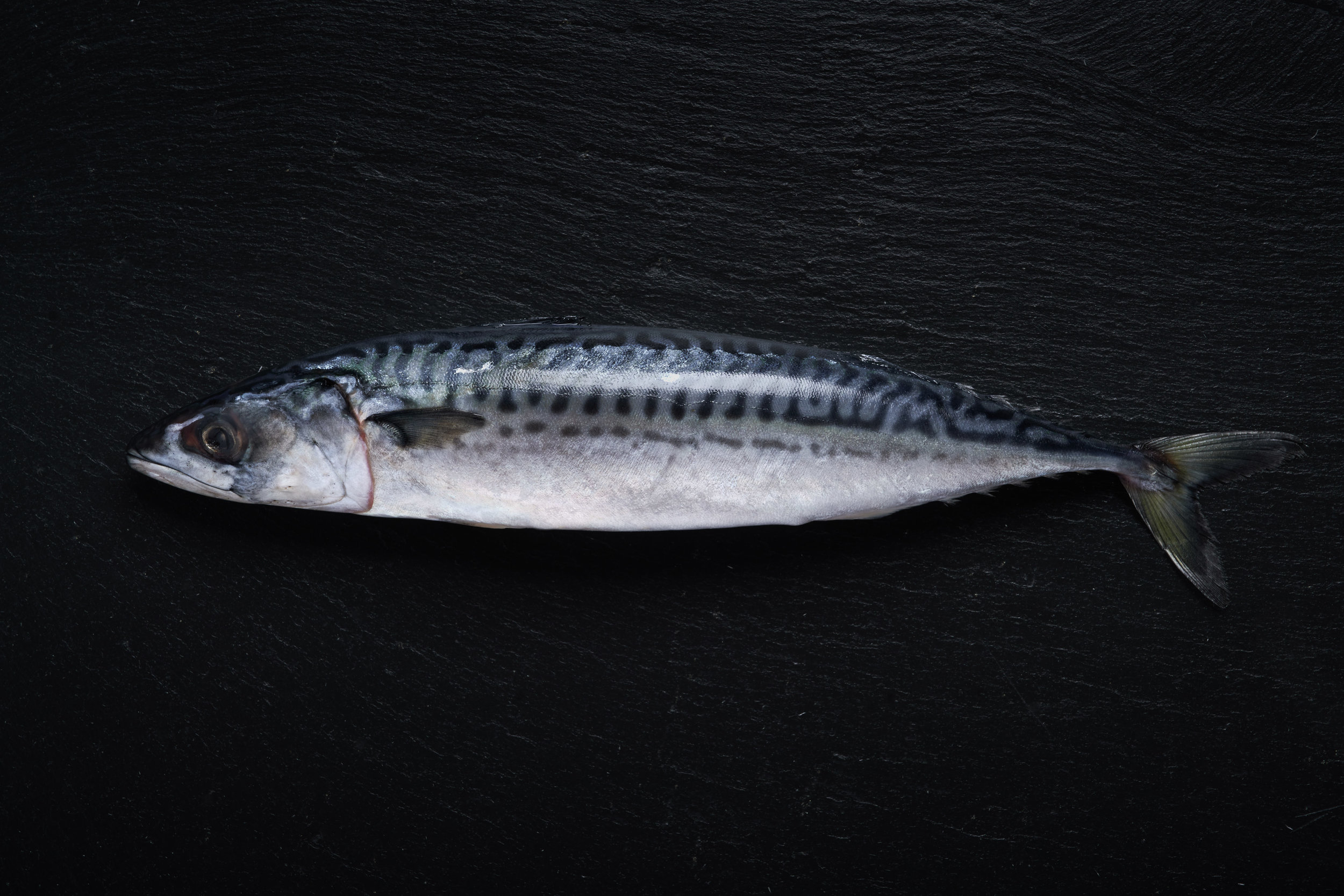 19-03-11_Mackerel_1737Website.jpg