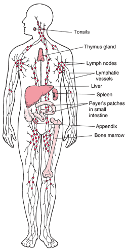 The Lymphatic System via The LGDAlliance.org | janny: organically.