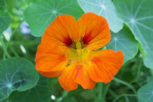 Flowerevolution: The Lotus Wei Book