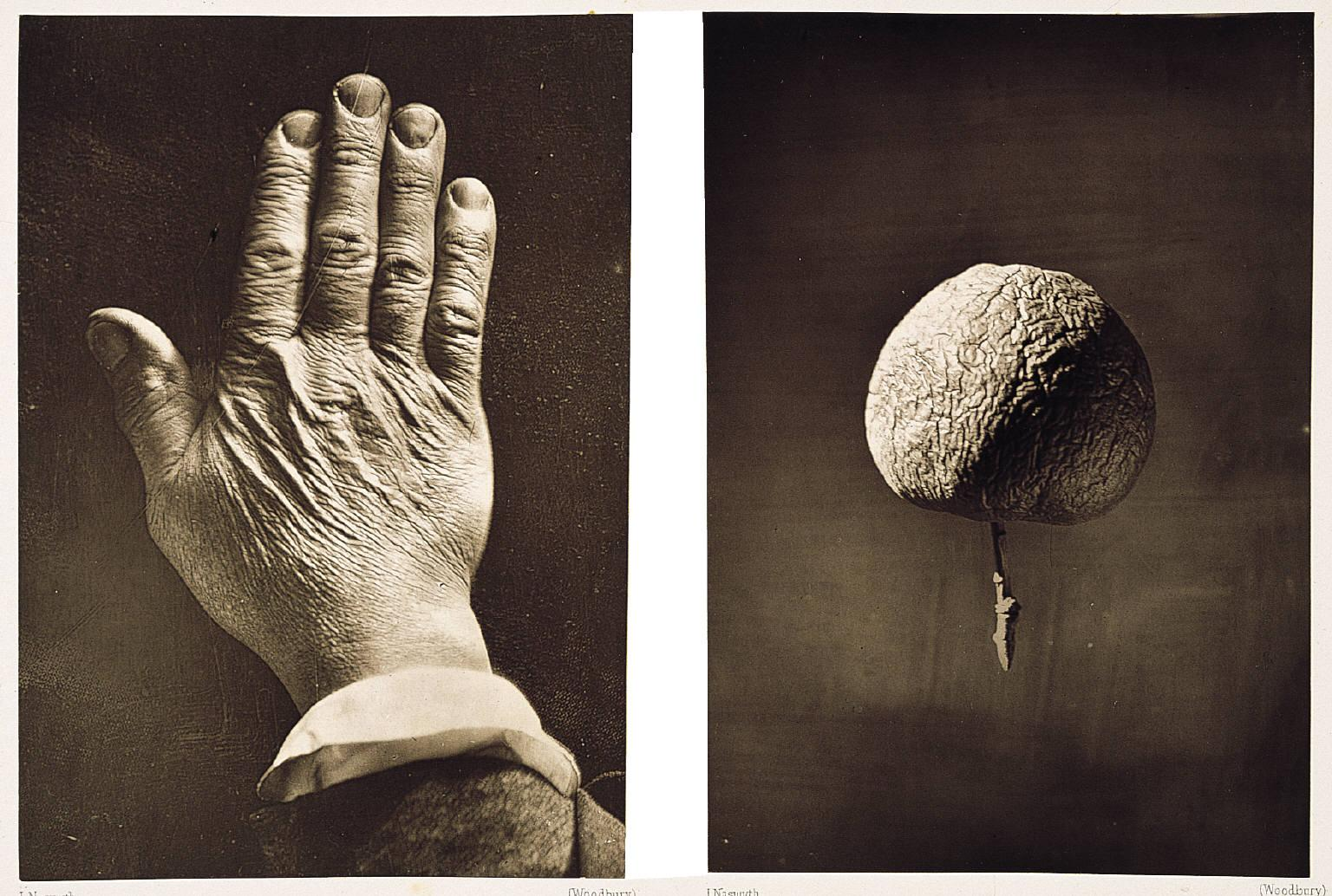 James Nasmyth,  The Moon: Considered as a Planet, a World, and a Satellite , 1885. Plate II: Back of hand & wrinkled apple to illustrate the effect of certain mountain ranges resulting from shrinking of the interior