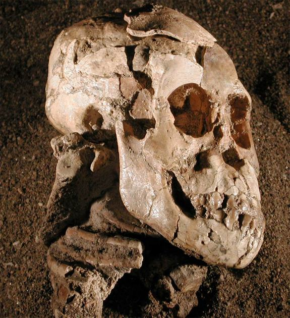 "3.3 million year old ""Selam"""