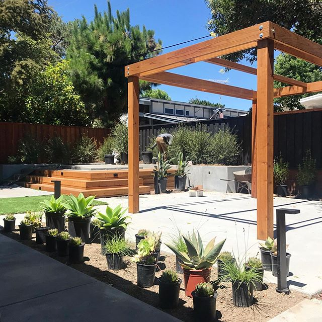 Planting Day for my client's family-friendly backyard renovation including a custom spa, dining space and lounge/fire pit area surrounded by greens and orange accents.  #variegatedgreenlandscape #eichler #modernlandscape #landscapedesign #gardendesign #succulents #pergola #californiamodern