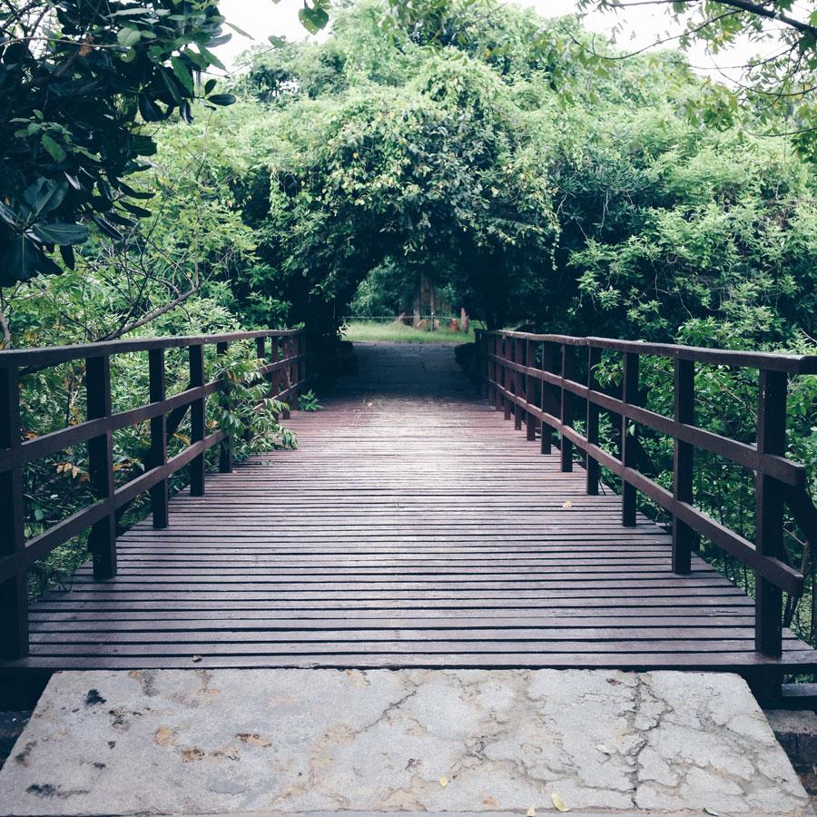 tholkappia-poonga-adyar-eco-park