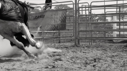 Still from  Bronco  , 2010   Black and white video, loop   Edition of 3 + 1 AP