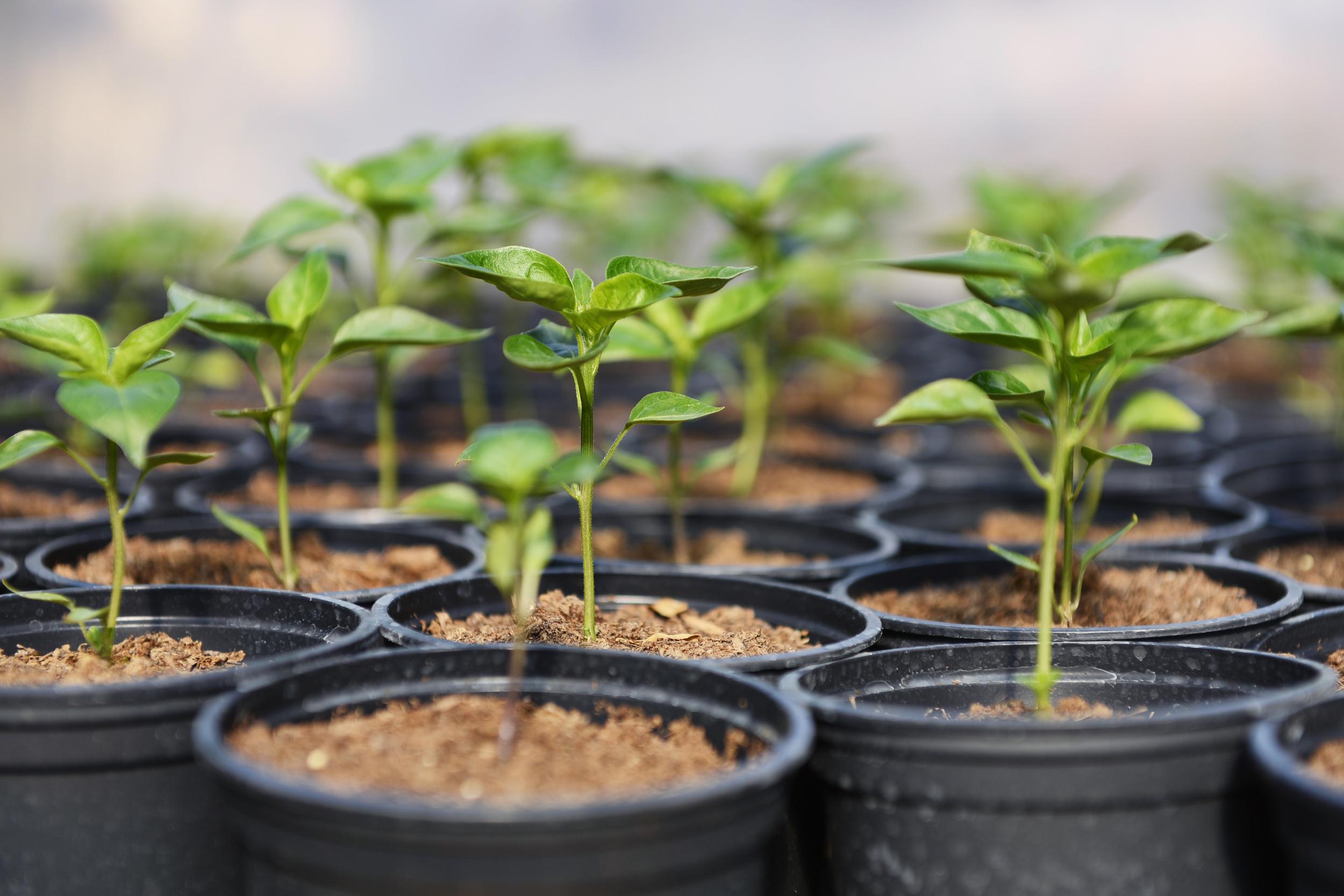 Hera PA Recruitment Hera Forest Seedlings