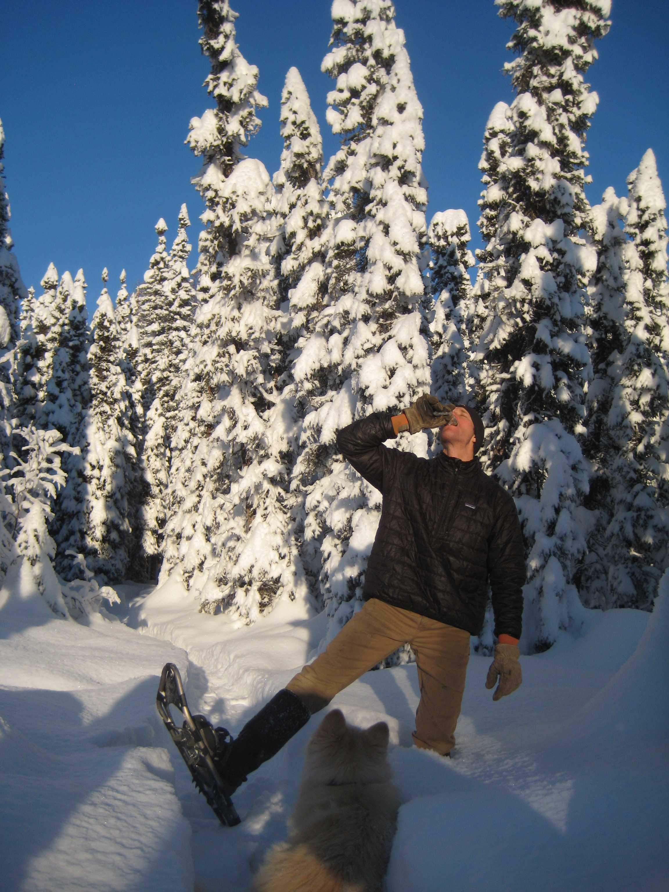 Kris from Talkeetna, Alaska sent thesephotos from an afternoon outing on snowshoes with his dog Kaiya.