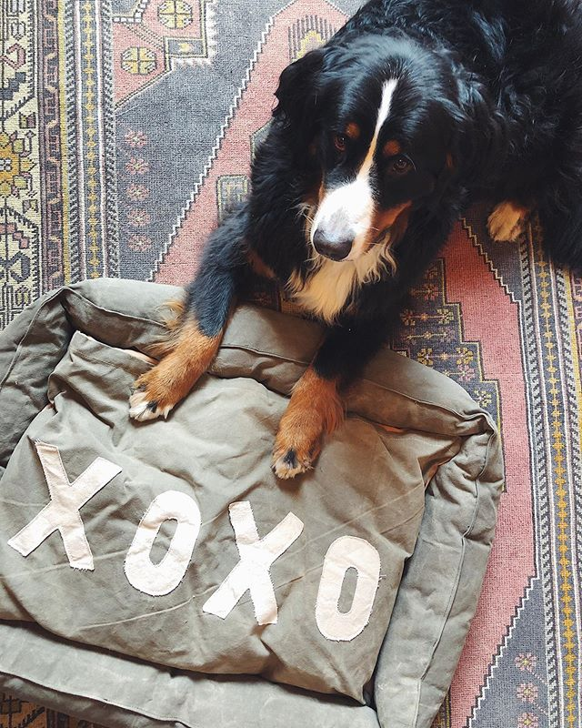 🐼we have two canvas XOXO dog beds in stock . . one medium & one small 🌿stop by & see us - here til' 5. or call to purchase ! . . #hothautehot #shopsmall #lostandfoundwares #vintageindustrial #reclaimed #repurposed #furniture #vintage #homedecor #salvage #style #interiors #interiordesign #homedecor #decor #vintagesign #home #vintagestyle #industrialchic #rustic #shoplocal #pgh #pittsburgh #modern #chic #homedesign #howiboho #jungalowstyle #bohemian #boho