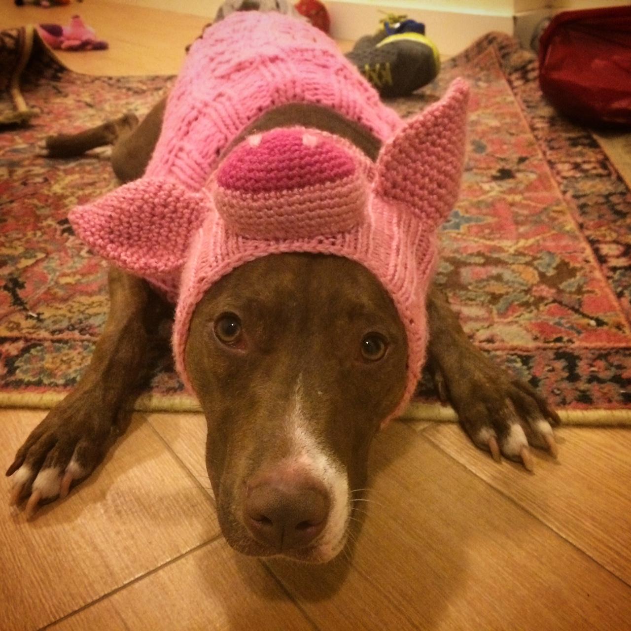 Penelope Pig aka Penny aka Penelopig aka @pigpenthepittie