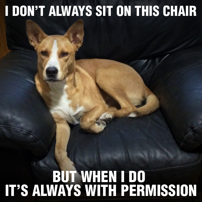 Jansen_Chair_Permission_Meme.jpg