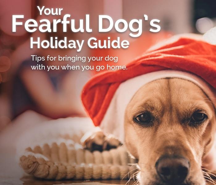 CC_FearfulDog_HolidayGuide_Promo_700x700_WEB.jpg