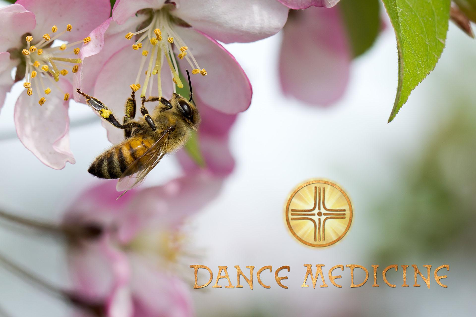 Honey_Bee_Dance-Medicine.jpg