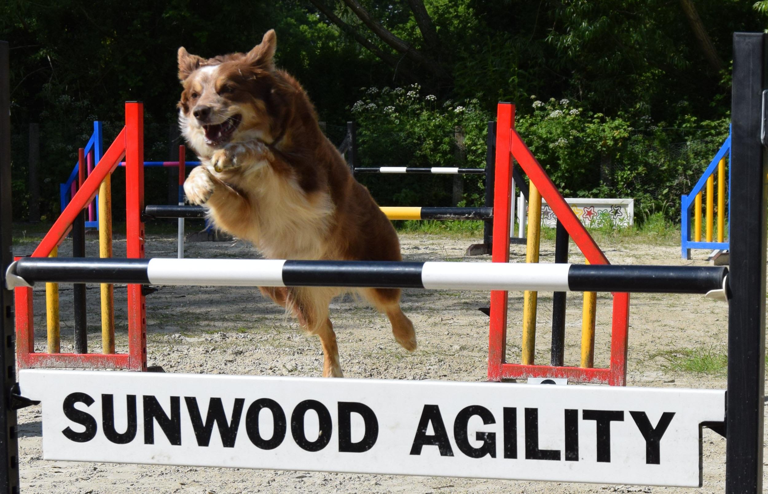Cara 0103 jump Sunwood agility close up.jpg