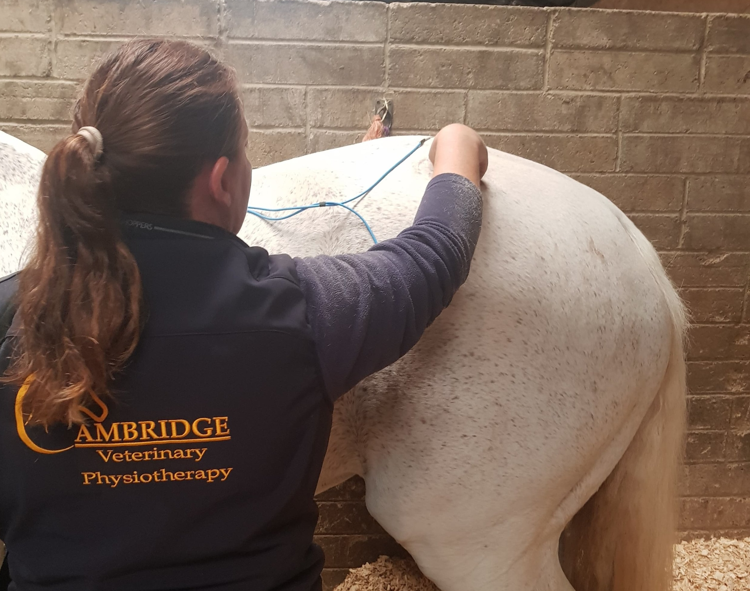 Equine Physiotherapy - with Cambridge Veterinary Physiotherapy