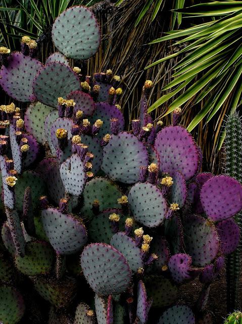 purple_cactus.jpg