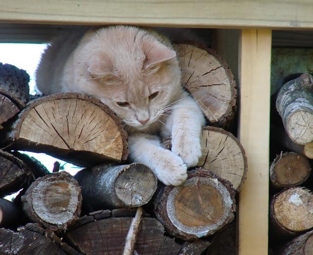 woodpilelion.jpg