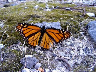 monarch_endofroad.jpg