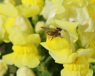 jellybee1.jpg