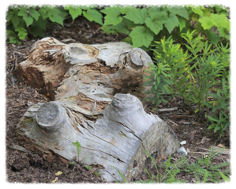 Old spruce log chunks embedded in slope