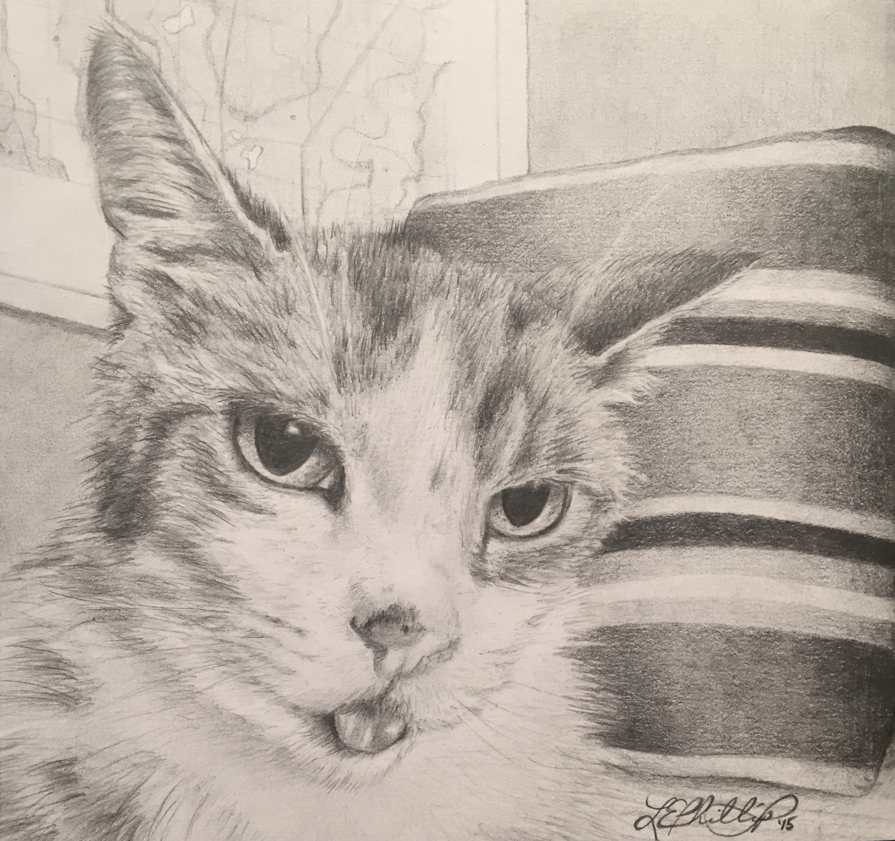 RUSSELL    Meet Russell;the crankiest feline I've had the pleasure of knowing.He was the (somewhat) patient subject of this drawing, which I ended up giving to his family following his passing. Russell had a pretty vibrant history, as far as cats go.Having paid the kitten premium at the Humane Society for this little guy who was waiting for the rest of his teeth to come in,the owners were in for a surprise at his first vet visit. As it turns out, this kitty was a malnourished senior at ten years old,and was actually losing teeth rather than waiting for them to come in. You'll notice he's sticking out his tongue... Given his lack of teeth,that's not by choice.You were worth every penny, Russ-cat.
