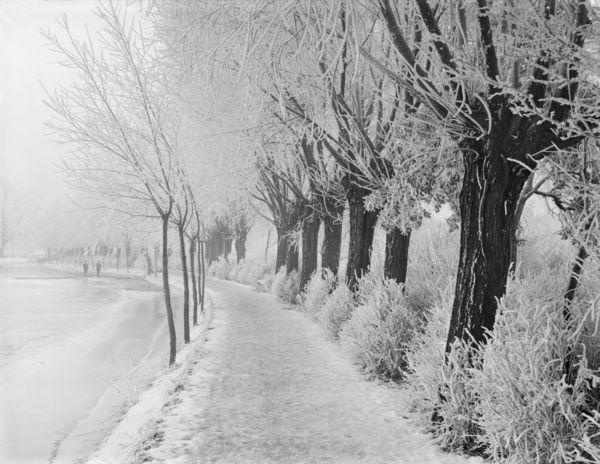 rime-frost-cc73-00401-13164644.jpg