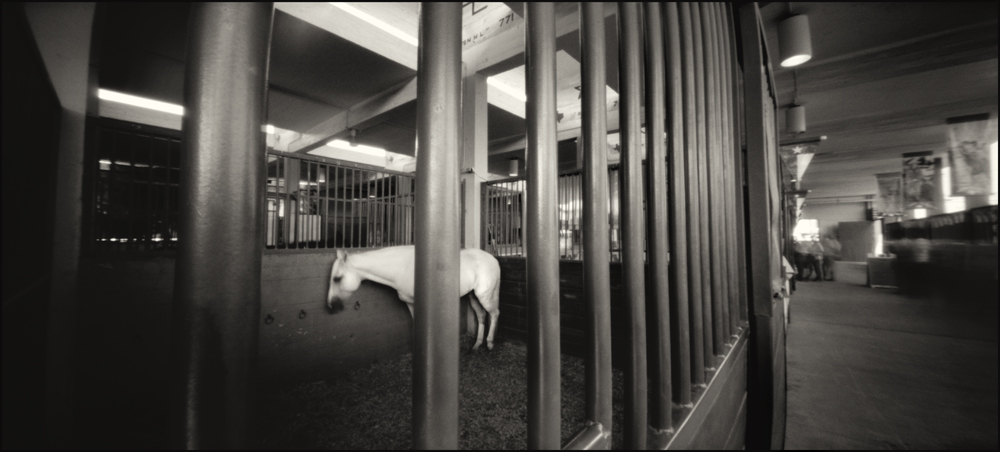 Lonely Horse, Equestrian Building.  Panoramic Pinhole Image © 2008.