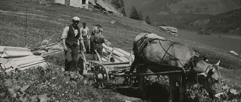 01-bergbauer-kuh-eingespannt-grevasalvas-graubuenden-1947.jpg