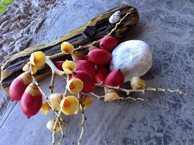 Coconut Flowers found by the rain forest in Colombia