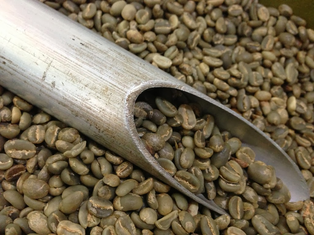 Green Coffee at Sacha Mama organic coffee plantation