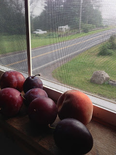 Fresh picked August plums and peaches