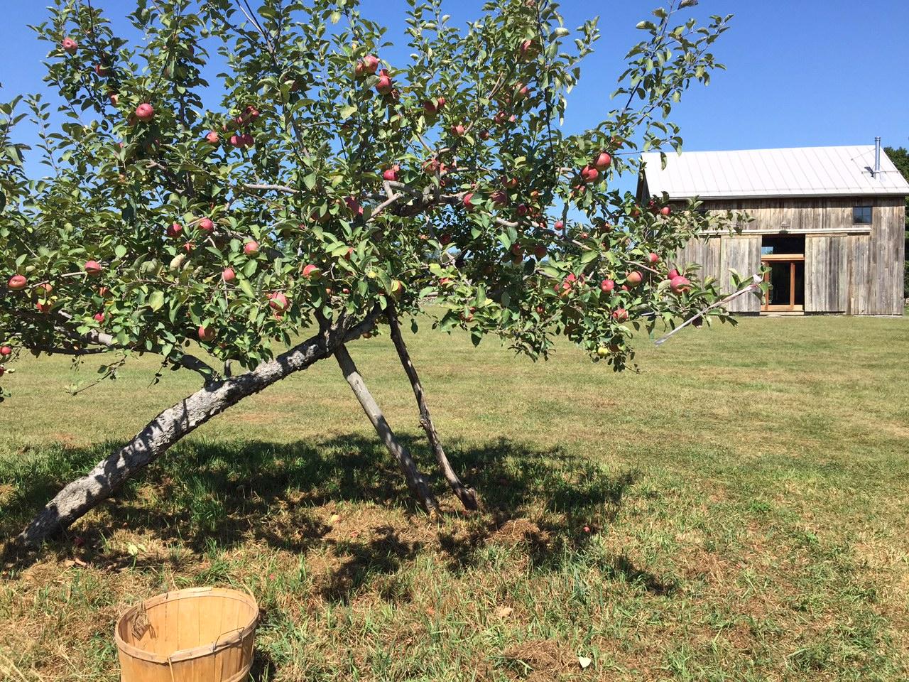 Apple season in  West Wind Orchard