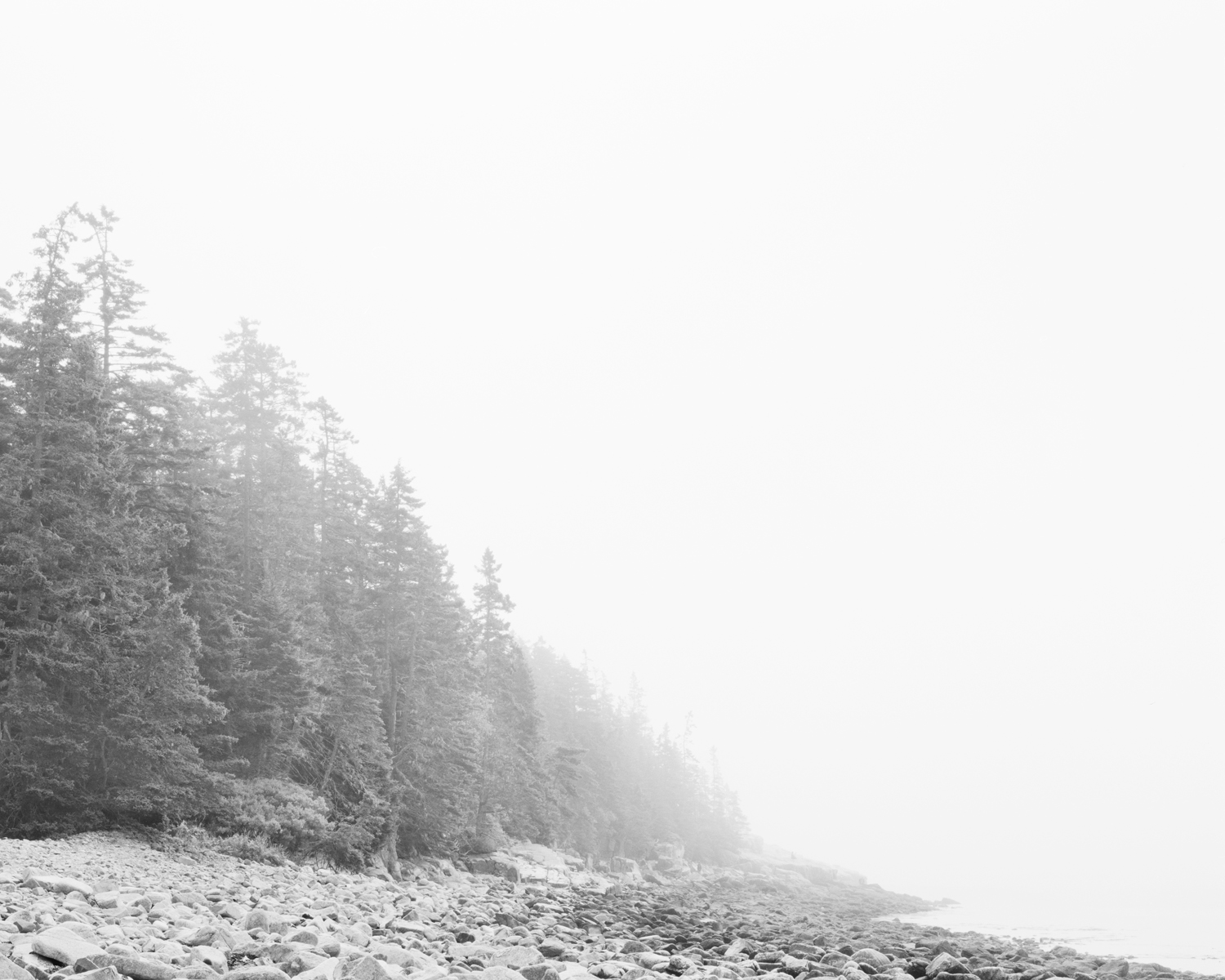 Fog. Ship Harbor, Acadia National Park, Maine. 2011