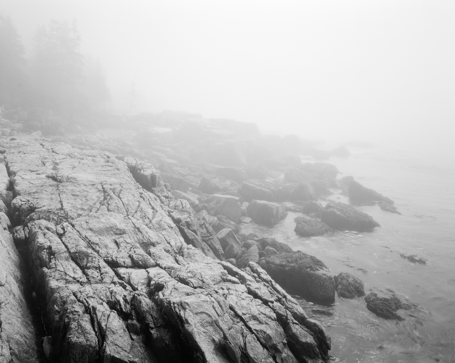 Fog in Ship Harbor, Acadia National Park, Maine. 2011