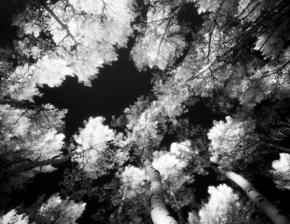 Aspens III, 2012 (infrared with 812 nm filter)