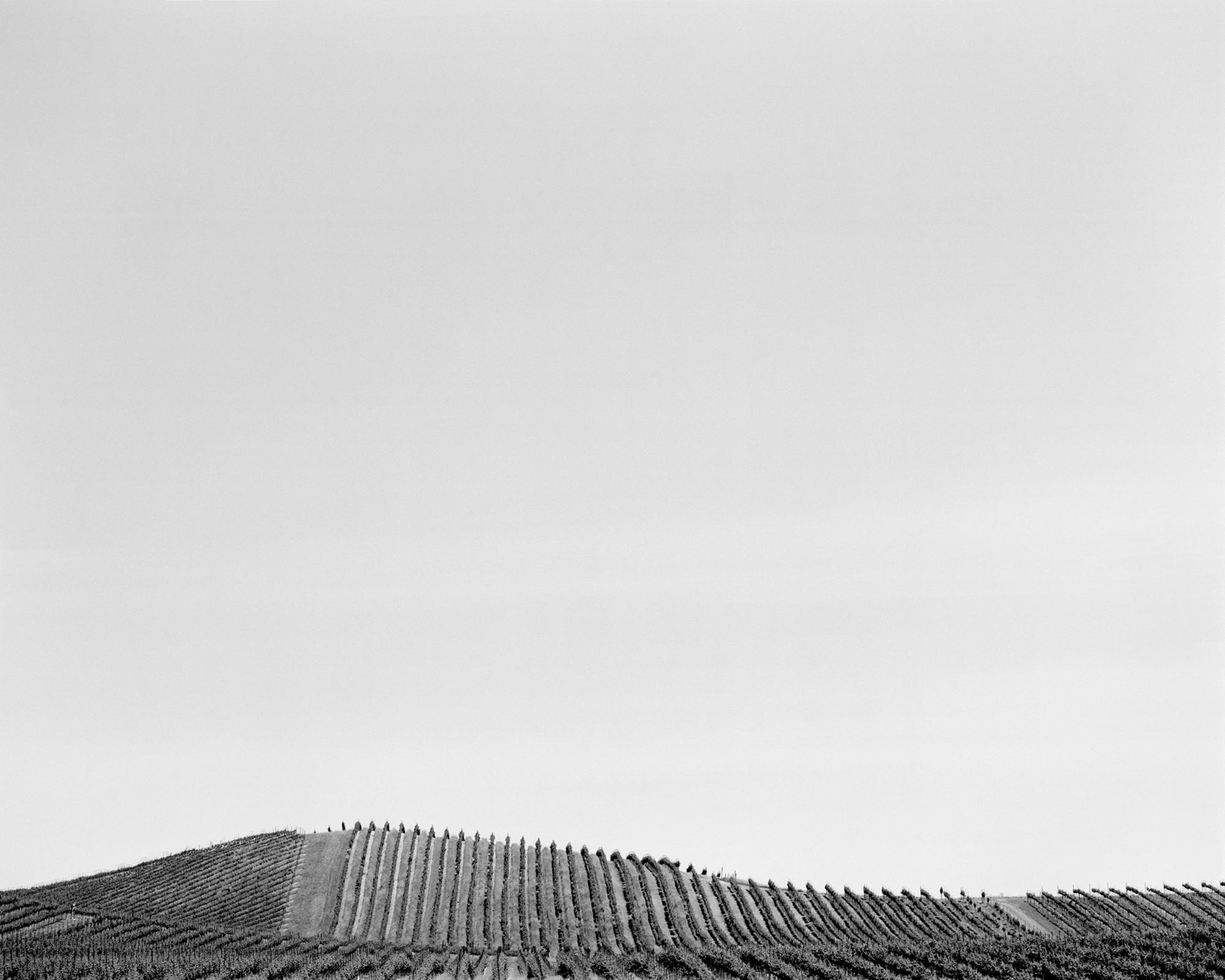Vineyard no. 1