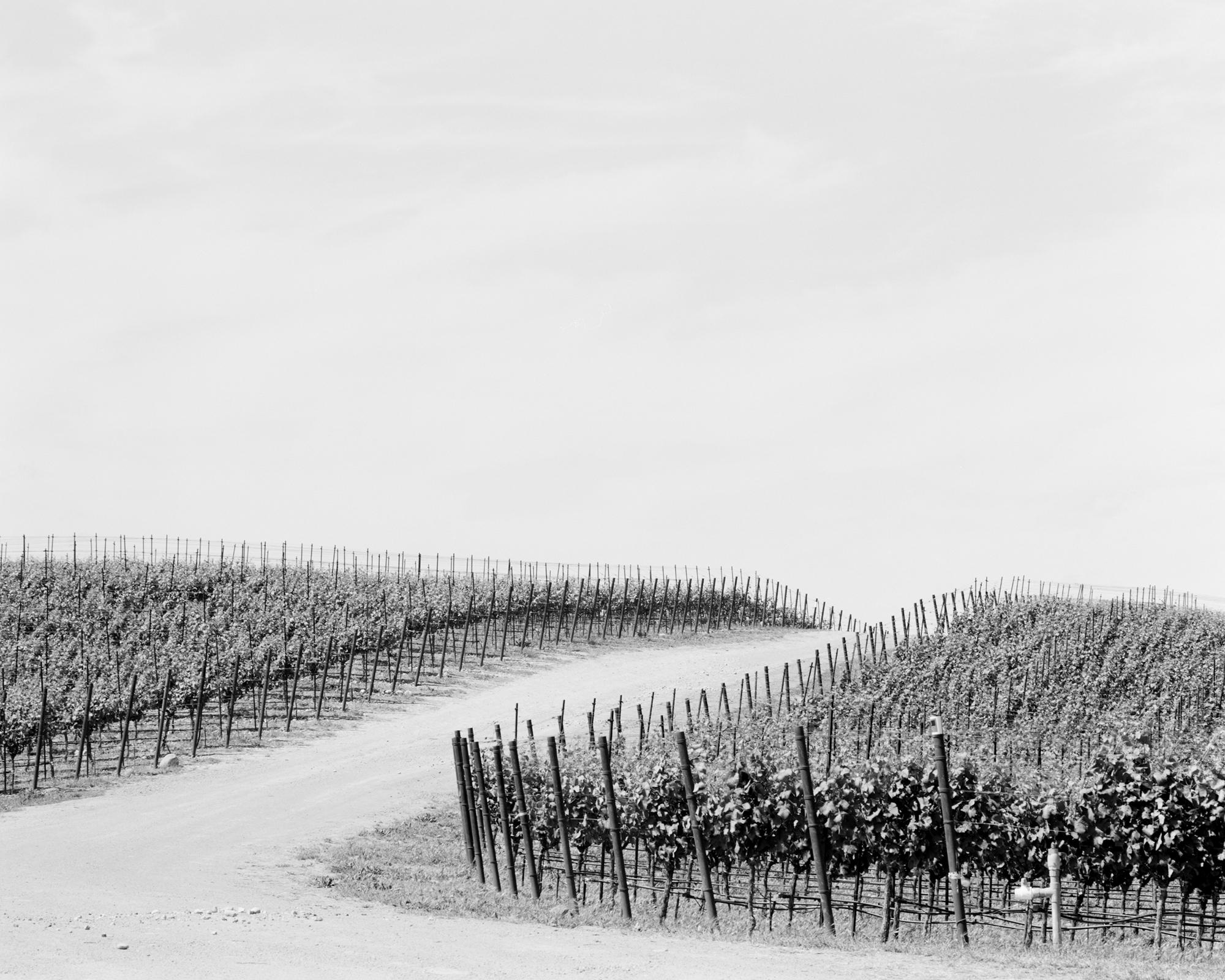 Vineyard no. 2