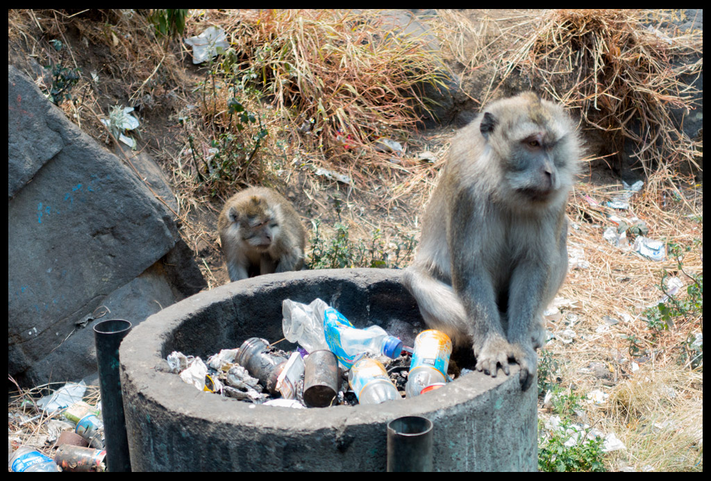 Monkeys and Trash, what a combo!