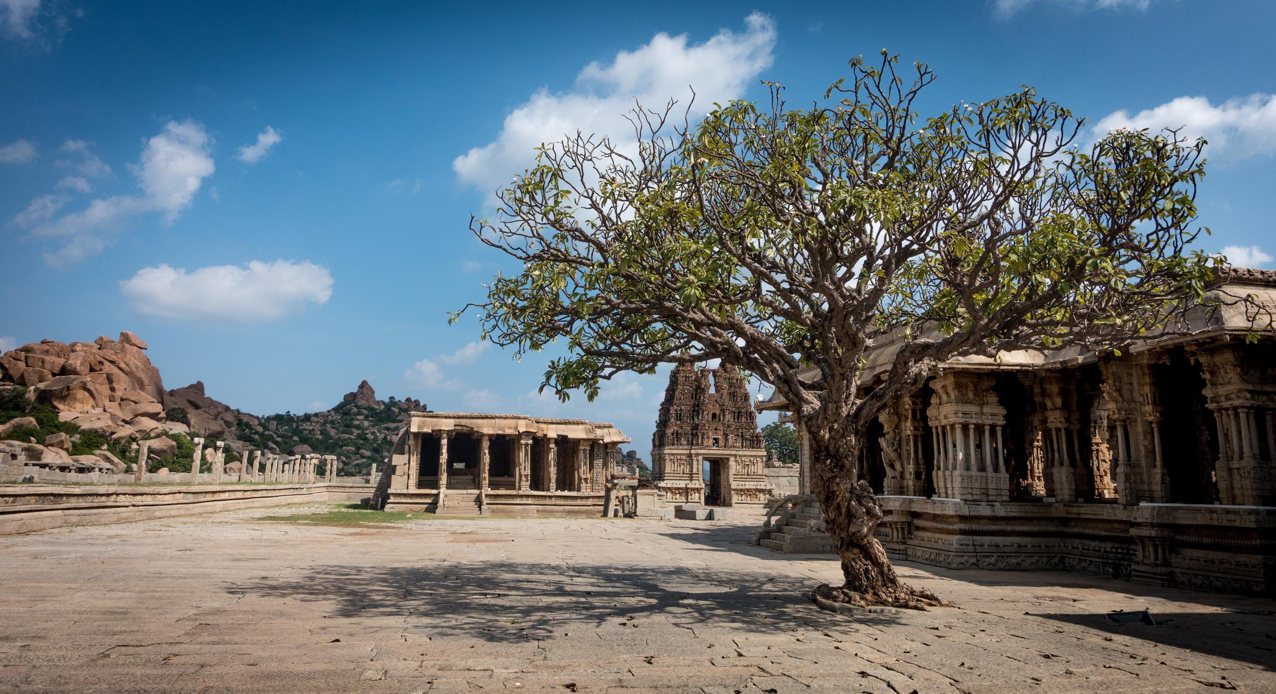 plumeria temple.jpg