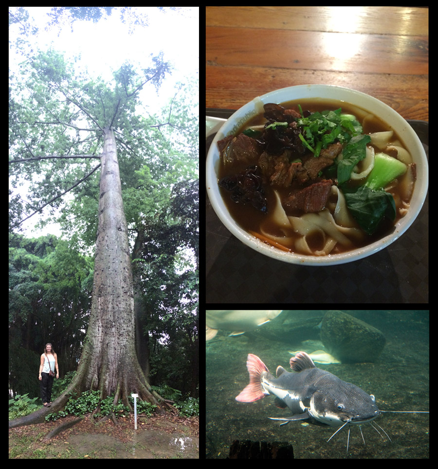 "Left: Huge tree at one of the many parks throughout the city. Top Right: Some scrumptious soup! Bottom Right: ""Bob"" the catfish at one of the botanical gardens."