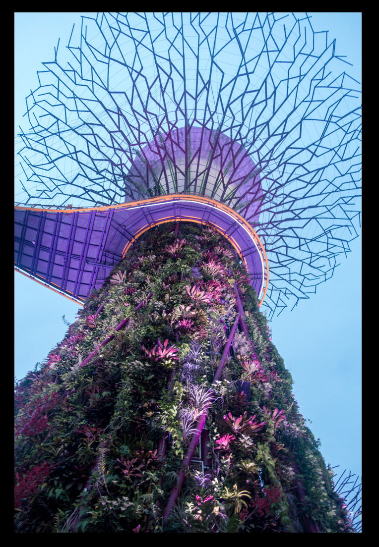All the vines and plants climbing the Supertree structures were amazing!