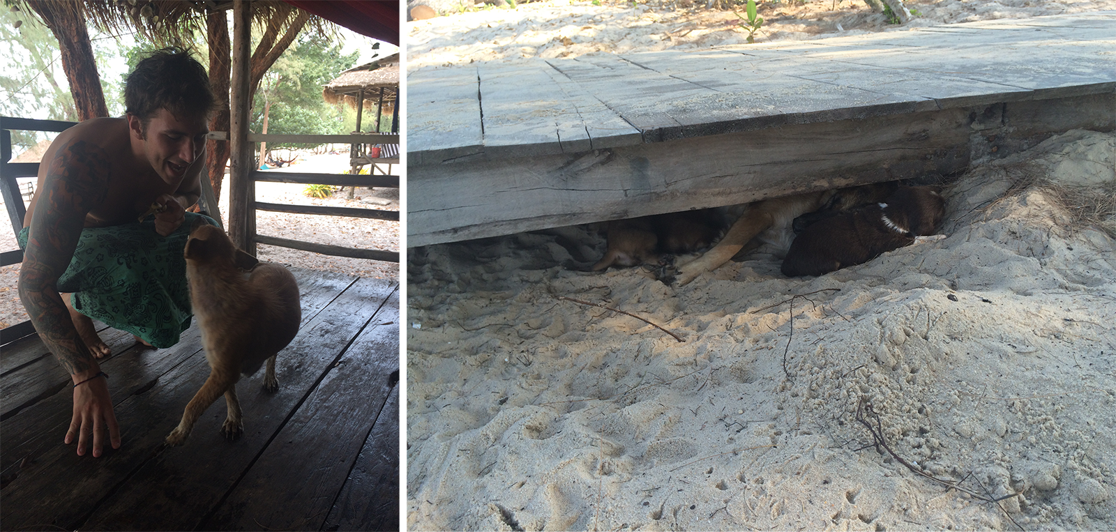 Left: Mikey and Fanta. Right: The puppy den!
