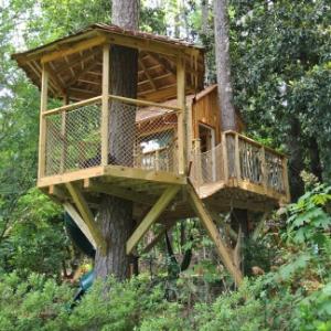 Zen Tree House