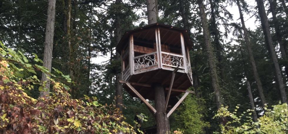 Great Treehouse in Portland Tree. (Courtesy  Sophia June )