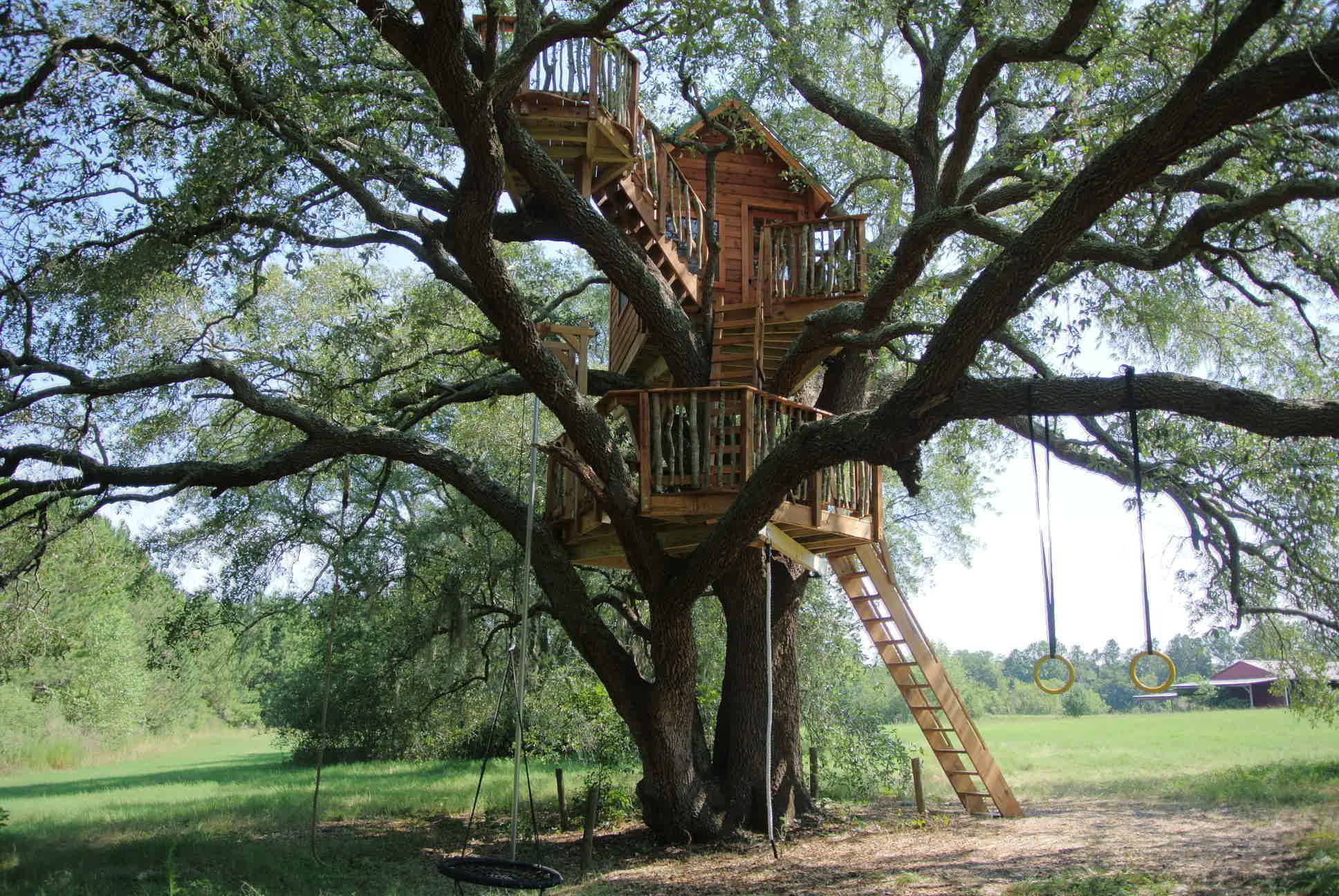"""Copy of <strong>Perchée dans un Chêne</strong><a href=""""/tree"""">Voir les photos du projet »</a>"""