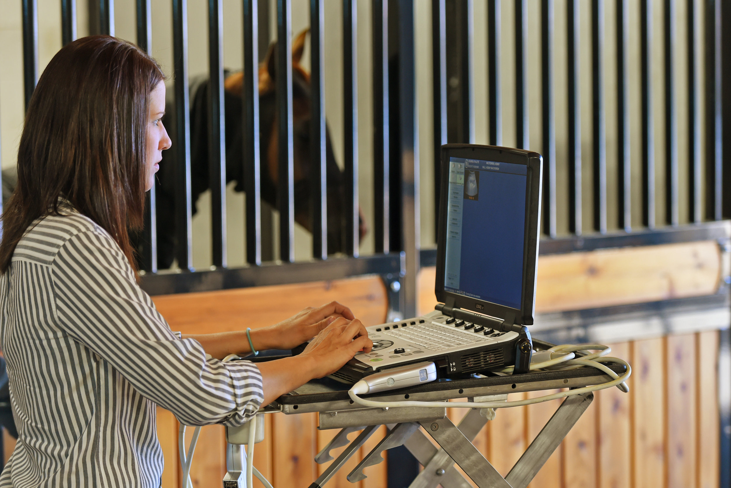 Dr. Jessica Bush Equine Reproductive Mare Fertility Exams.JPG