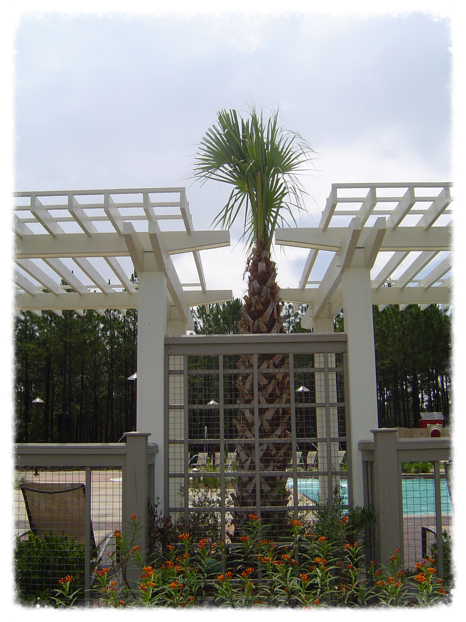 Trellis with Decorative Fence