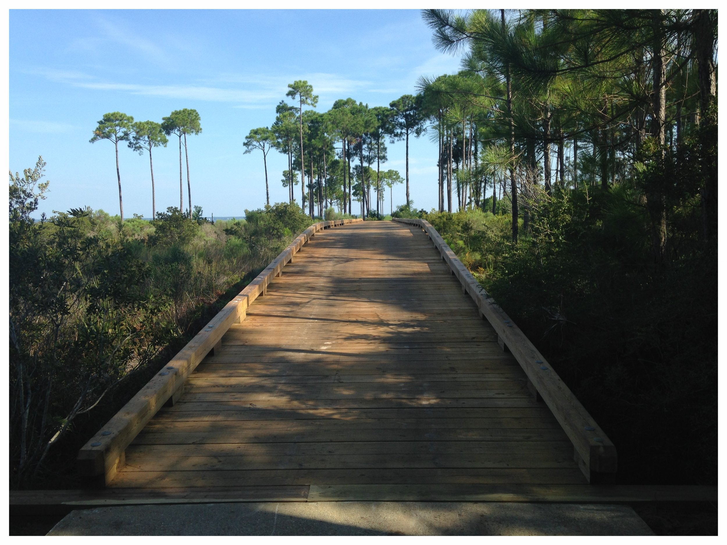 Wood Bridge Construction