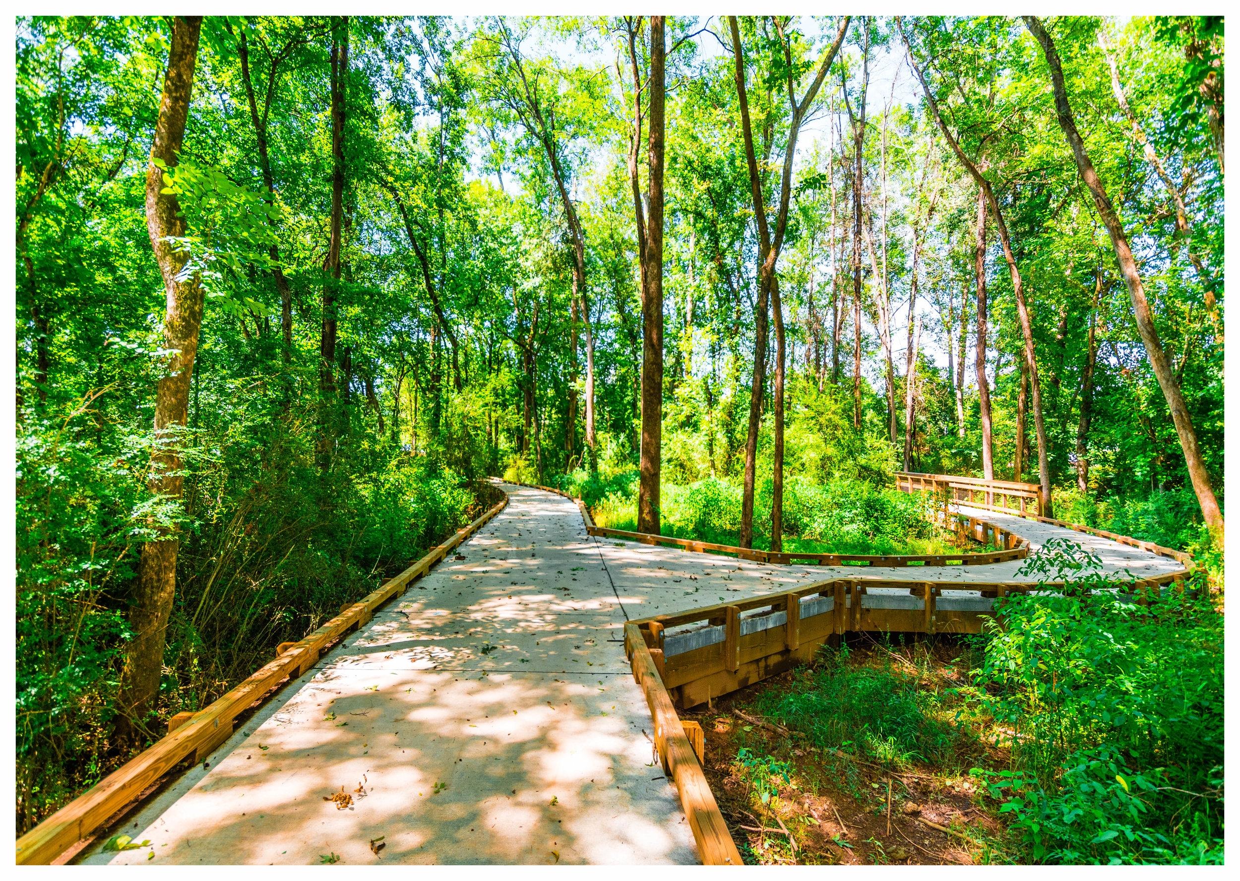 Nature Trail Construction