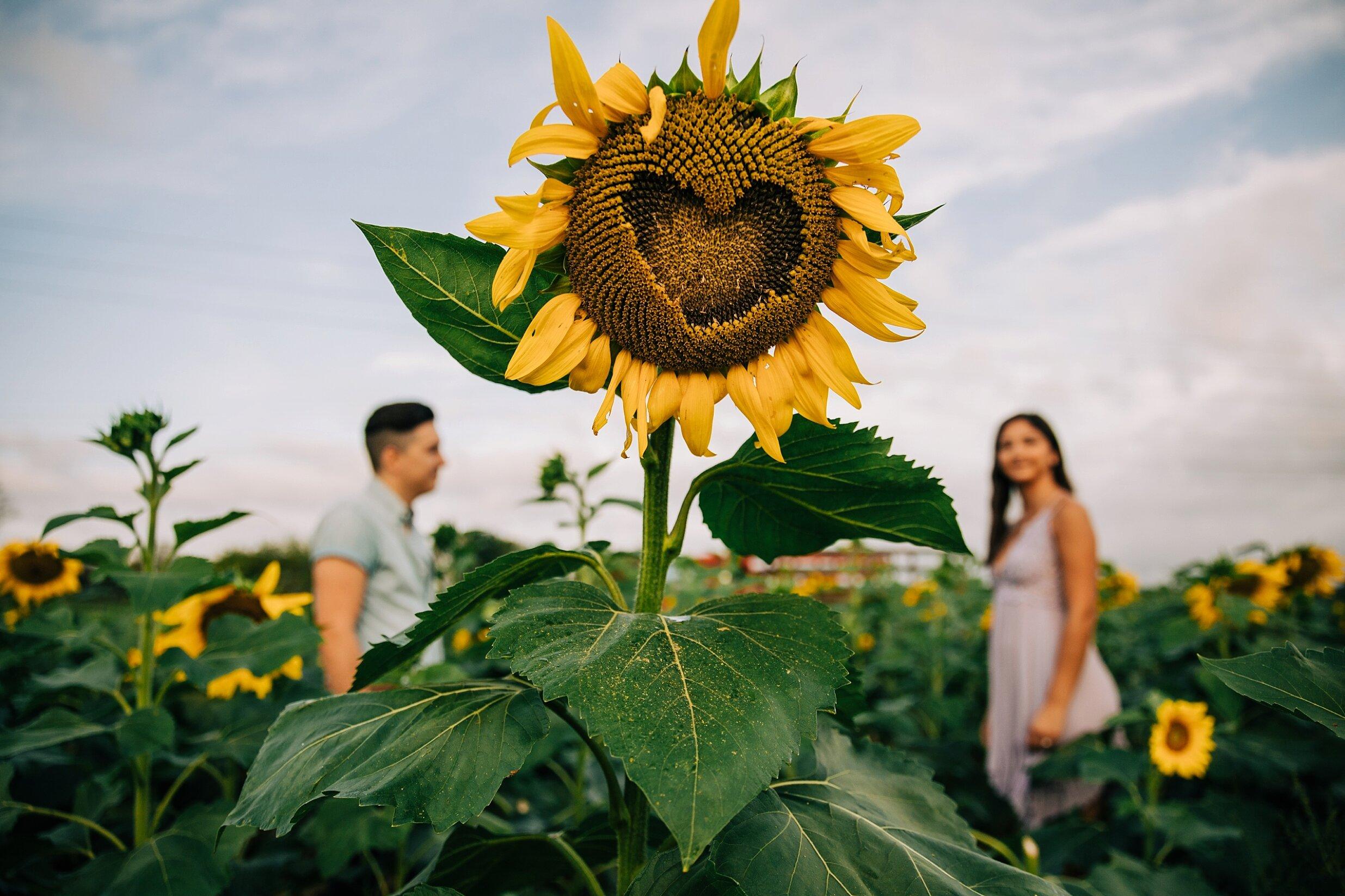 sunflower-field-engagement-session-nj_0010.jpg